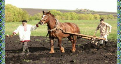 Условия труда на севе